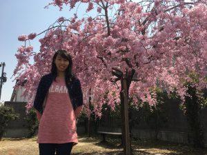 天神川の桜と岩本サ責
